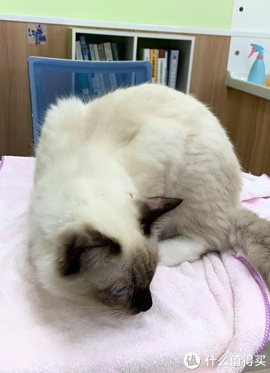 家养猫咪常见病大全+治疗方案,为主子一键收藏!