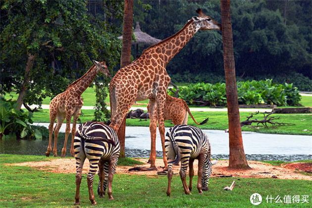 观赏性玩乐之动物园篇
