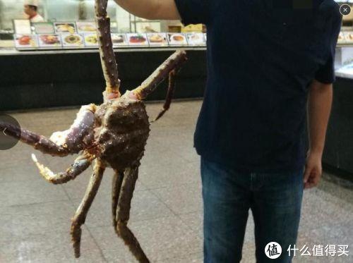全身上下写着贵字的帝王蟹,我吃的不是蟹而是钱!!