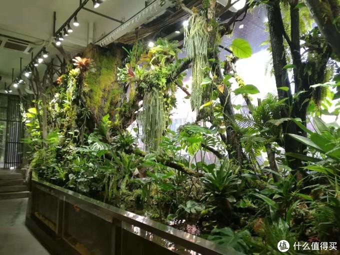 金山草木居的热带雨林缸(福州的朋友可以去玩玩,很不错的)