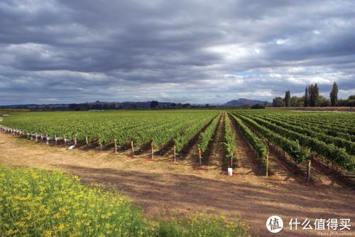 新西兰的葡萄园-平平平平平