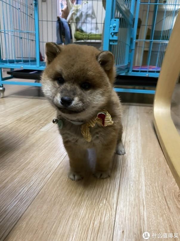 Yuki棕熊