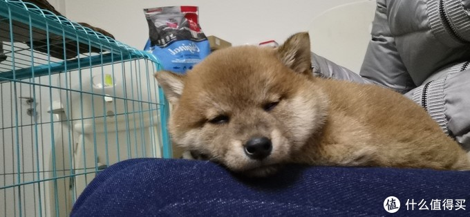 睡觉的狗子