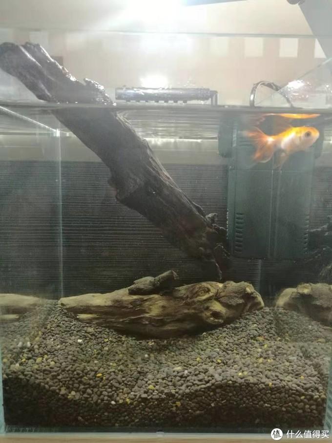 开缸鱼,放好的水质先过滤二天,就可以放只鱼进去体验,重点是检测水质好坏