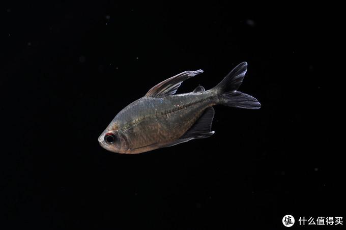 摄影新人经验分享---如何拍摄好那些漂亮的观赏鱼