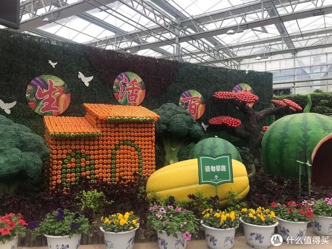 瓜果蔬菜嘉年华—游览莘县农业嘉年华生态园