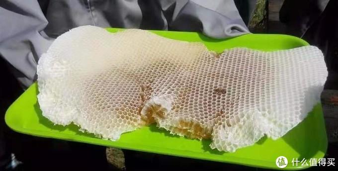 歪理简单说,什么才是真正的好蜂蜜