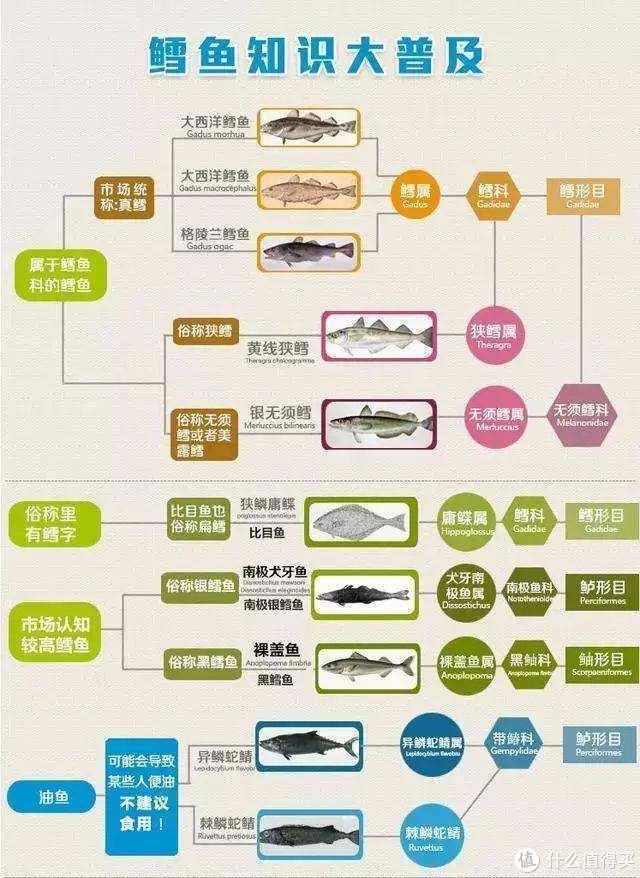 常见鳕鱼分类