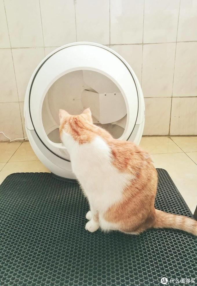 安生事件频发的自动猫砂盆到底值不值,养猫大户硬核全面测评
