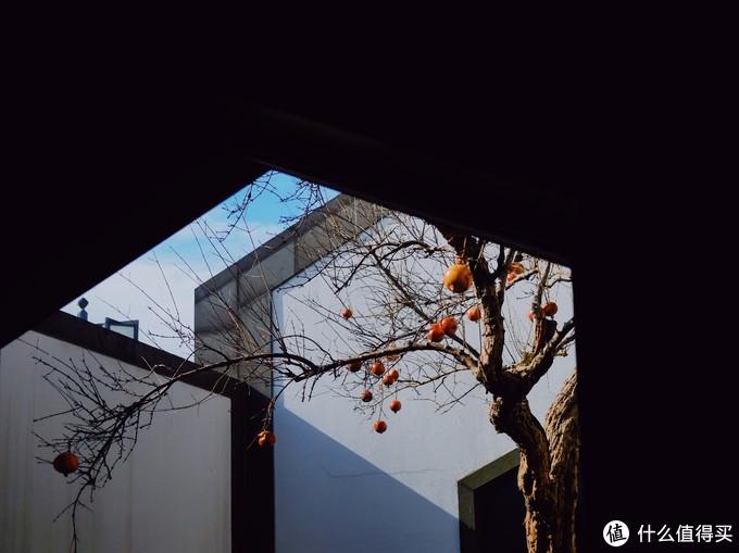 冷空气来袭,去苏州秋游一番?