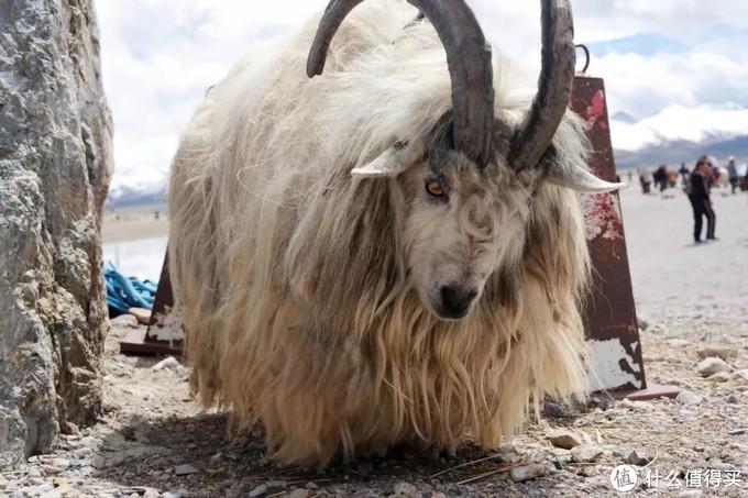 一文带你了解西藏的神山和圣湖:念青唐古拉和纳木措
