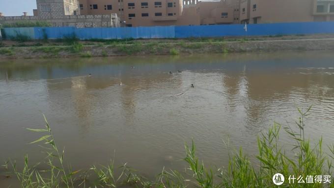 城外小河,里面还有鸭子