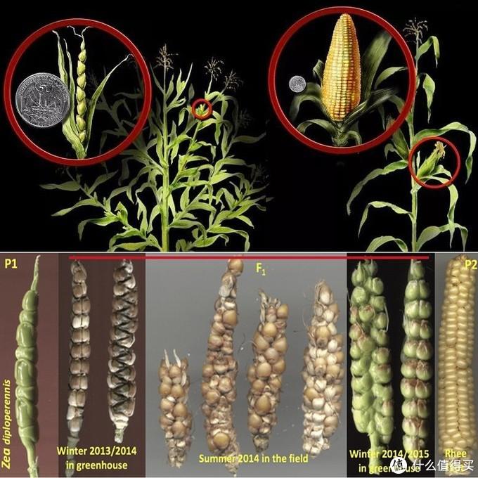 什么才是好的农产品-论品种产地之间的关系