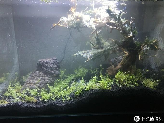 不用换水的草缸, 懒人专用(不需要CO2)总成本不超200,鱼虾共生