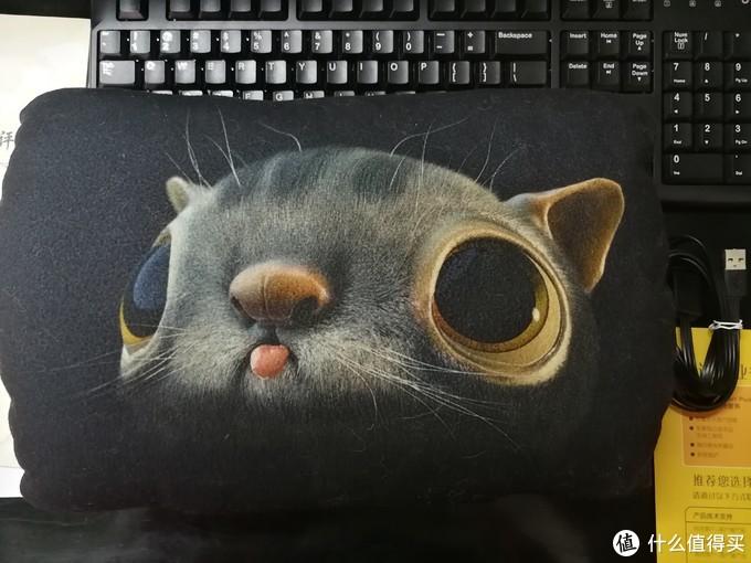 正面的猫咪眼睛贼大