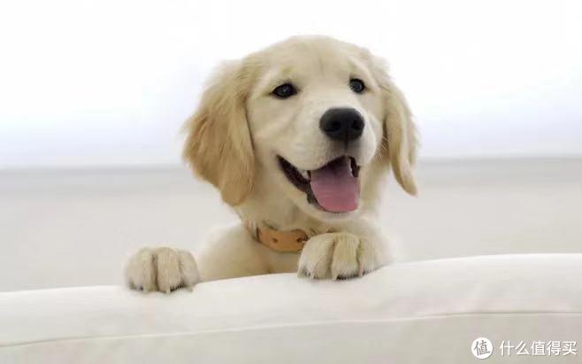 值无不言156期:走进狗粮, 选宠物狗粮你需要知道这些,附推荐清单。