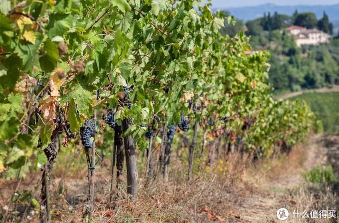 葡萄酒的风格和品质谁来决定?