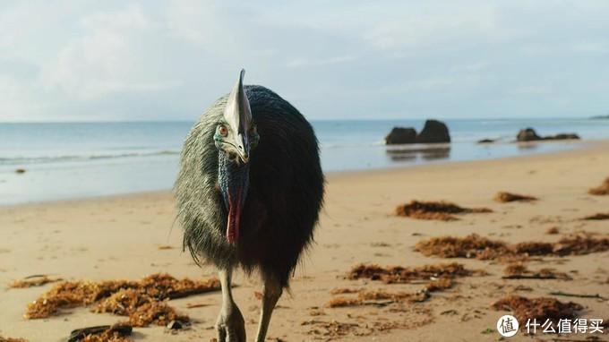 2019年度15部超高质量的纪录片,真实世界比你想象还要精妙绝伦,令人叹为观止!(附观看链接)