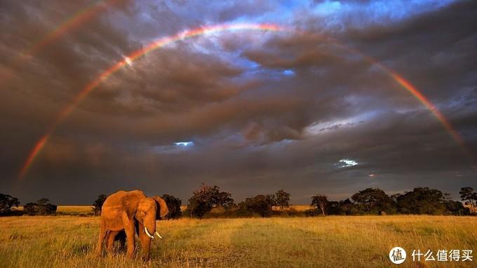 非洲大象与彩虹