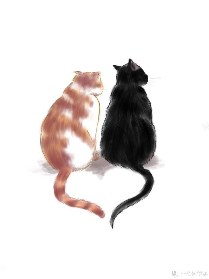 简单又不挑嘴的自制猫饭,附送双十一猫粮晒单