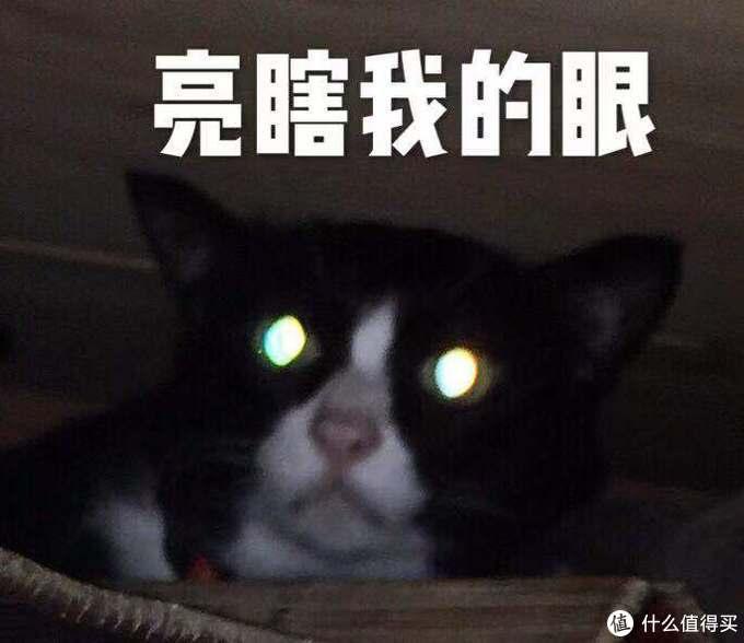 新手养猫你需要这些产品