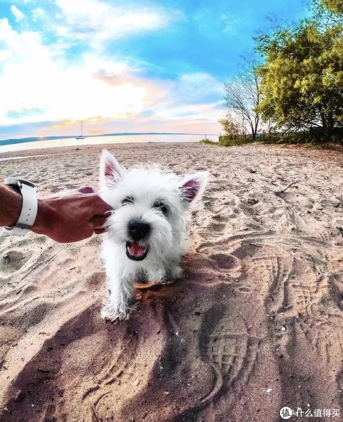 想要带宠物去旅行,这些事情你需要知道