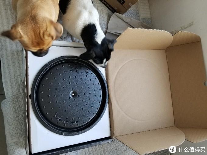 两个好奇的狗狗