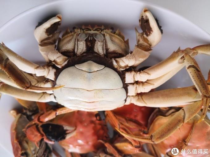 圆圆的母蟹 还是比公蟹喜人