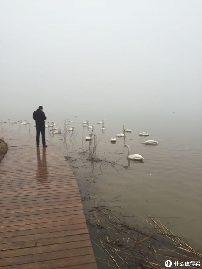 游人和天鹅近距离接触