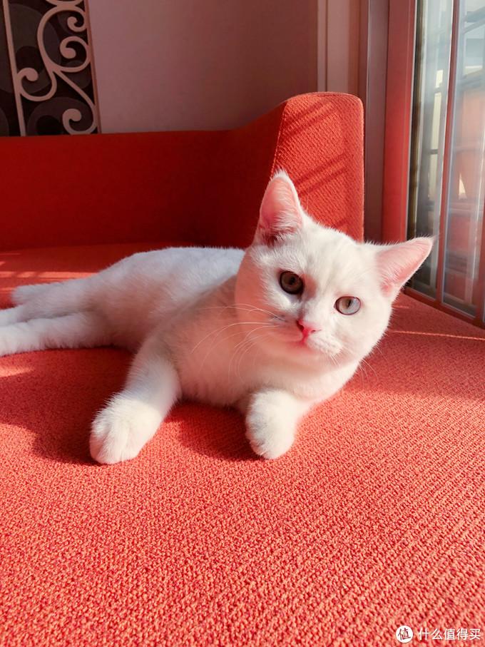 买猫后才知道的清洁神器,买一次就根本停不下来