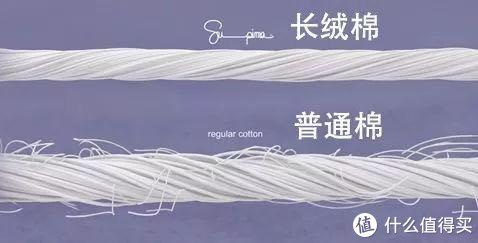 长绒棉与普通棉的对比