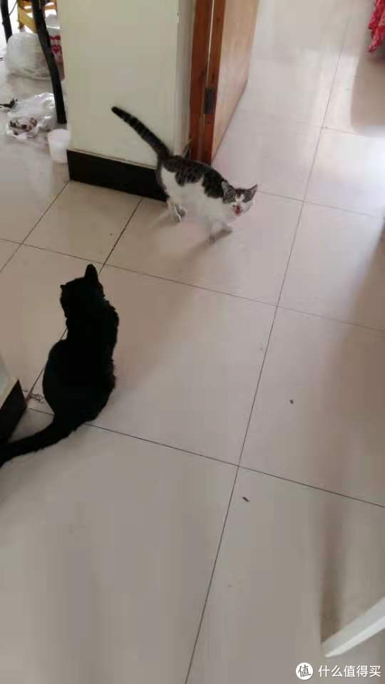就是这货,后来才发现小可怜很饿,给了好吃的之后,就被我家公猫无情的。。。毕竟我家猫没绝育