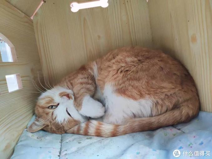 撸猫篇:校园里流浪的毛孩子 (多图)