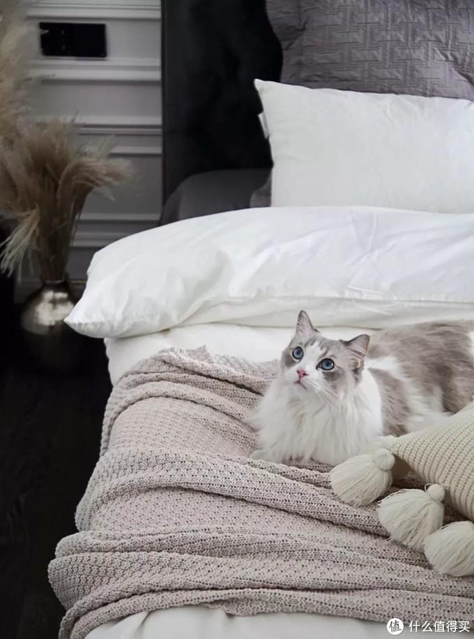 ▲本次案例中小夫妻两人的猫