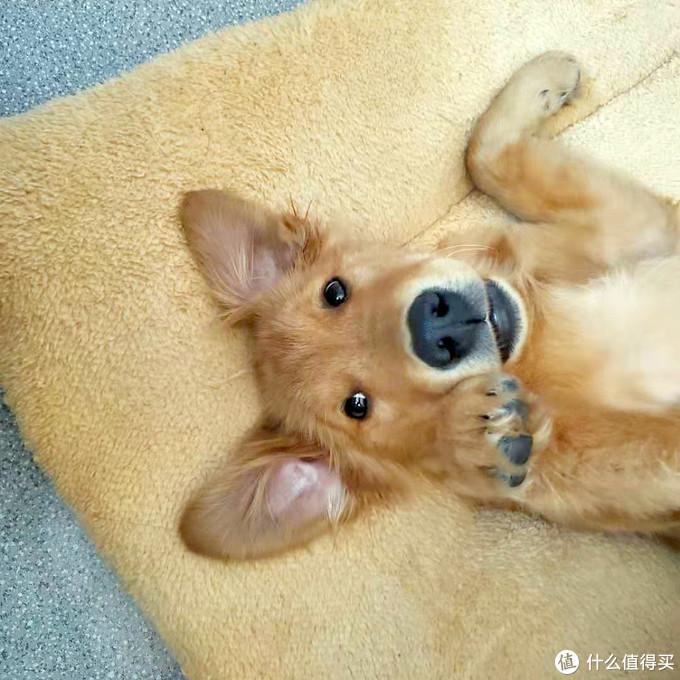 独居米狗的自我修养(内含51件小米生态产品推荐)