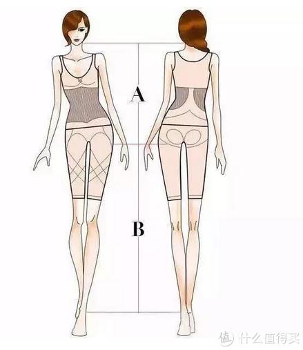 从臀线处开始测量