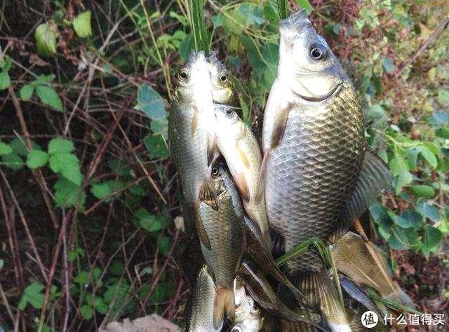 用草串鱼,小时候钓鱼没那么多装备,但很快乐!