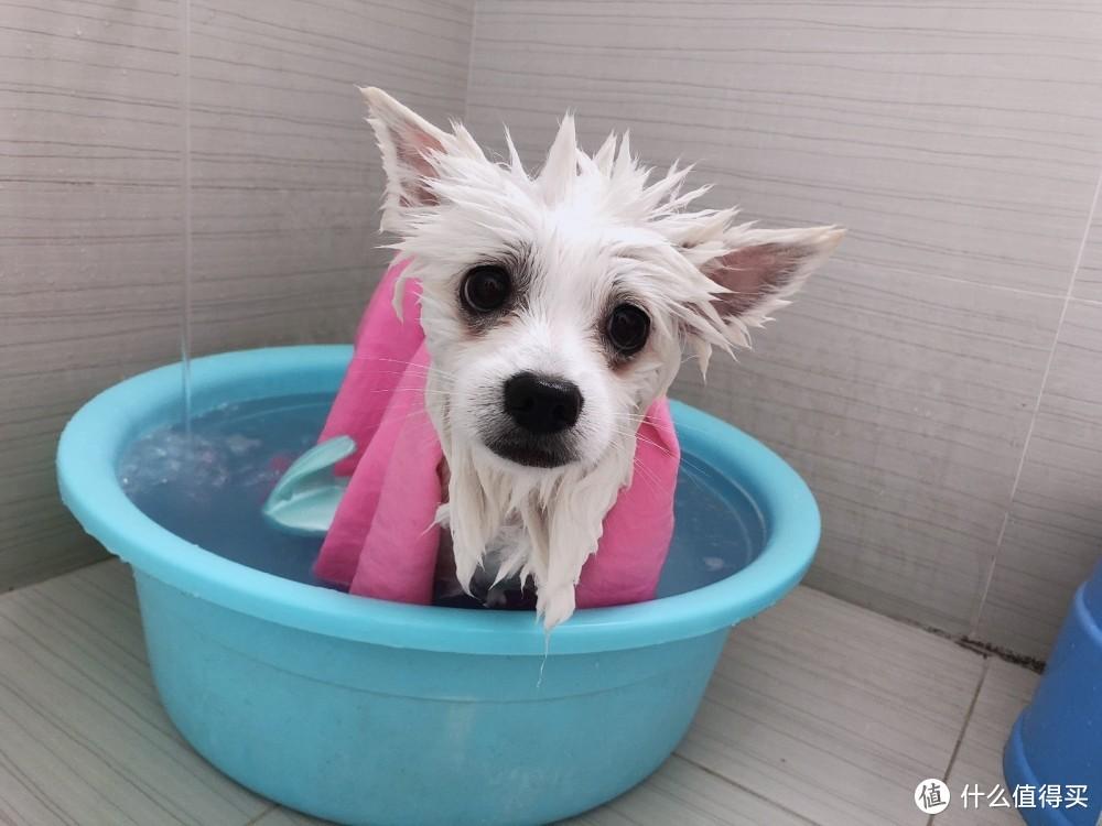 团圆小可爱的逆袭,居然是泡个澡