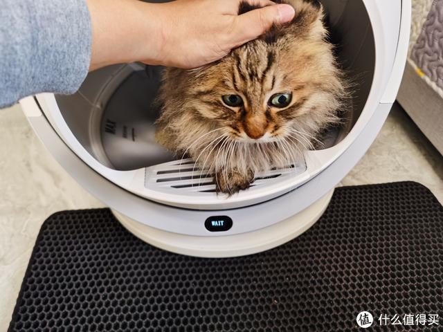 铲屎官们的最爱,Petree全自动智能猫砂评测