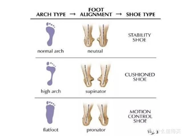 足弓形态图