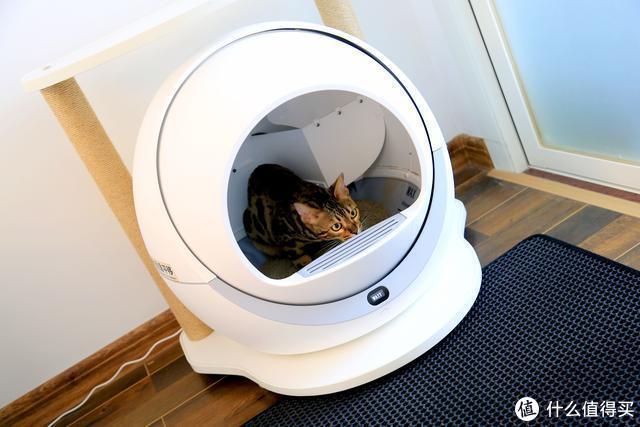 男人撸猫就不能精致?安排个超五星的厕所试试?(实拍自动猫砂盆运作)