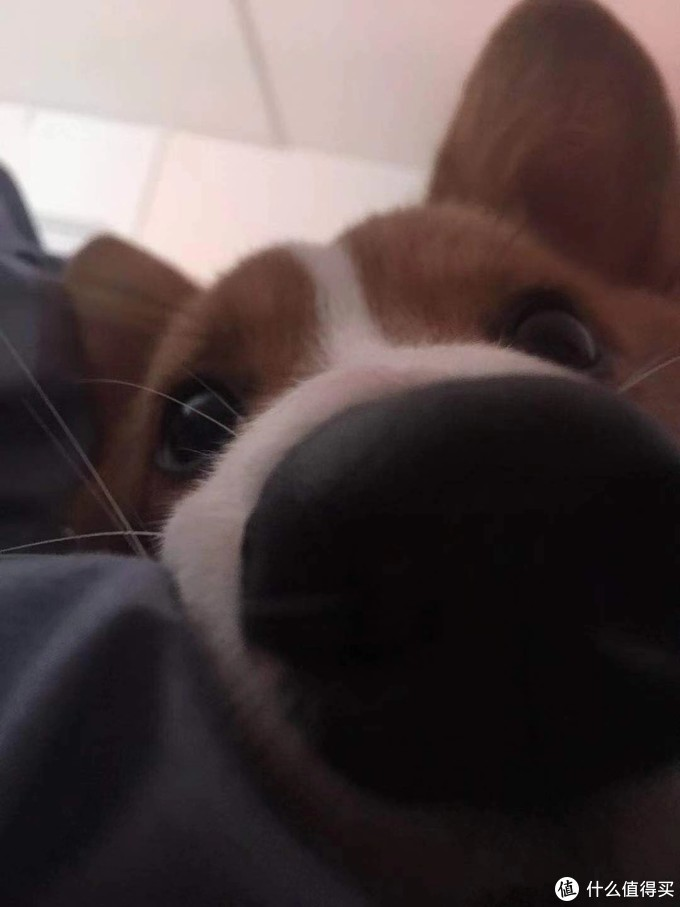 小哈哈尼,耳朵大的那个