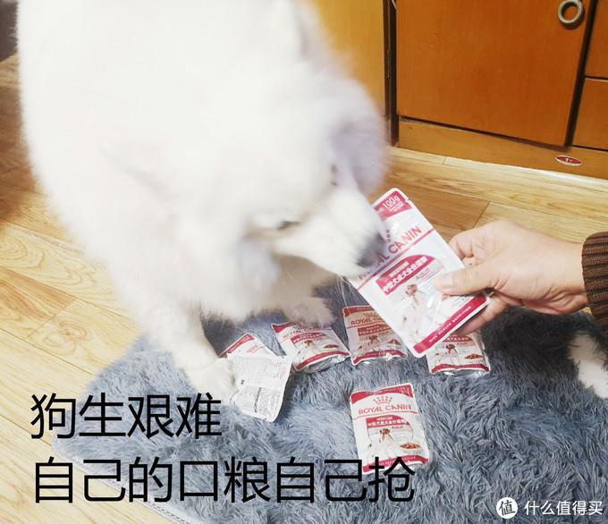 给狗狗的新年礼物!宠物湿粮怎么选,关键知识点全收纳!