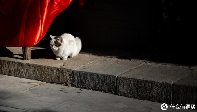 潭柘寺的猫子狗子越来越少了,早10年前春夏交接来游玩,满坑满谷的各种肥猫们~今天就看到它一只