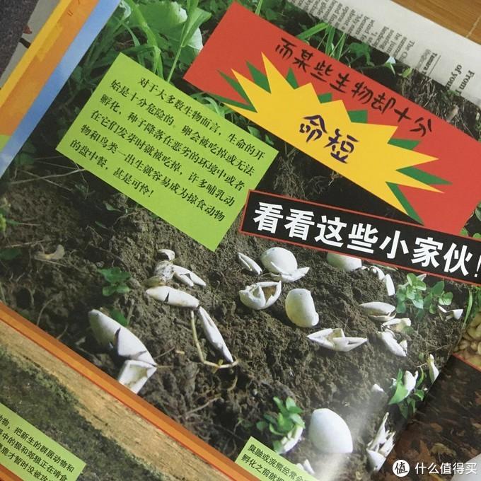 一只死鸟引起的事件,《我发现一只死鸟》评读
