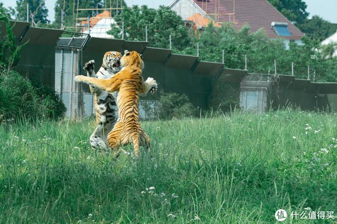 5.23野生动物园