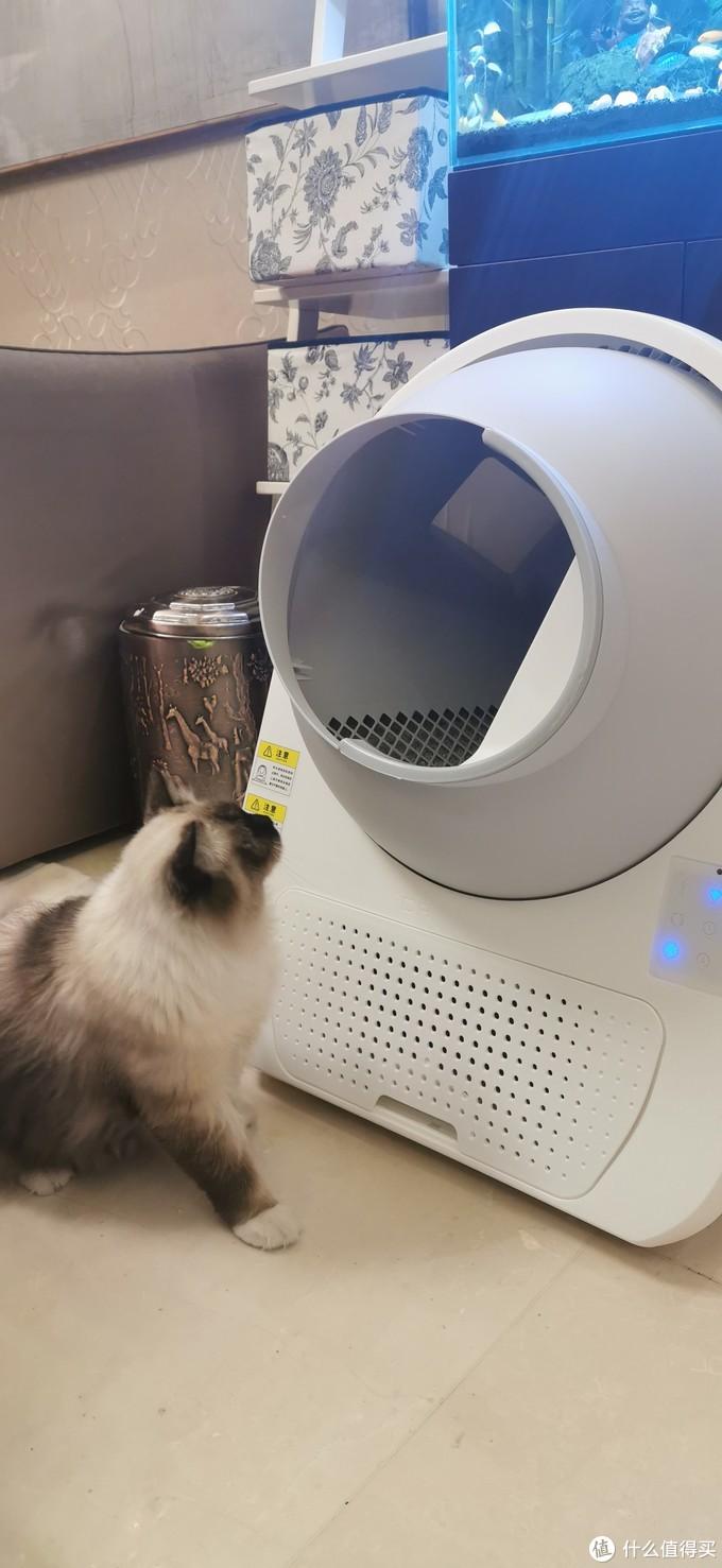 猫猫自动铲屎机