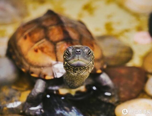 小龟:你看我干嘛,该冬眠了啊