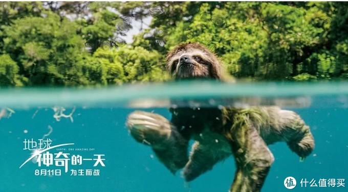 英文解说听不懂?盘点适合宝宝观看的十部中文解说的神级自然纪录片!与宝宝一同看起来~