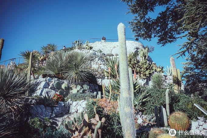 这就是异域花园了,各种仙人掌